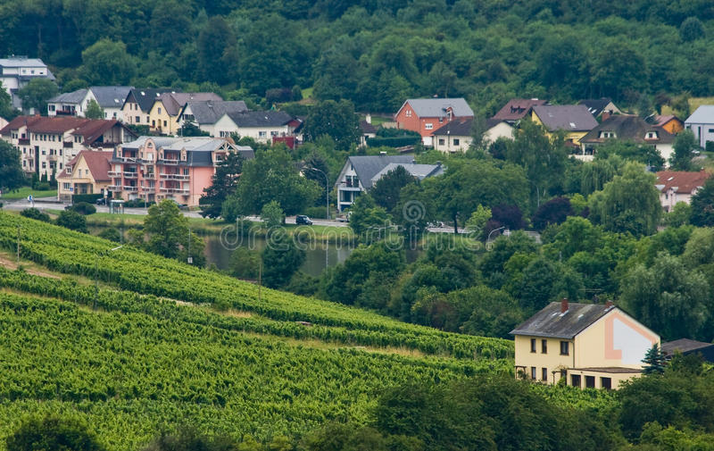 Download Houses Between Forest And Vineyards Stock Images - Image: 11029254