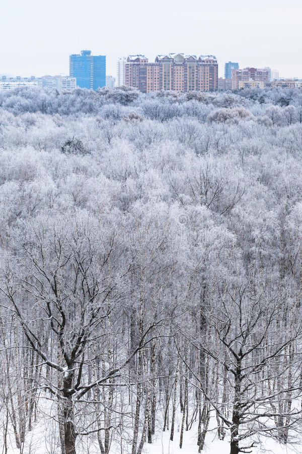 Houses on horizon and view of woods in snow. Houses on horizon and above view of woods in snow in cold winter morning royalty free stock photo