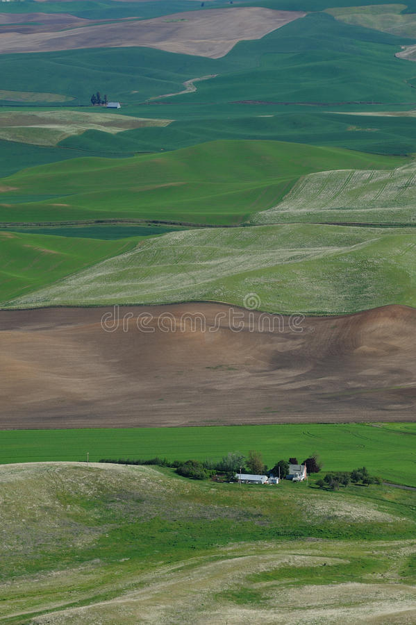 Houses in wheat field royalty free stock image