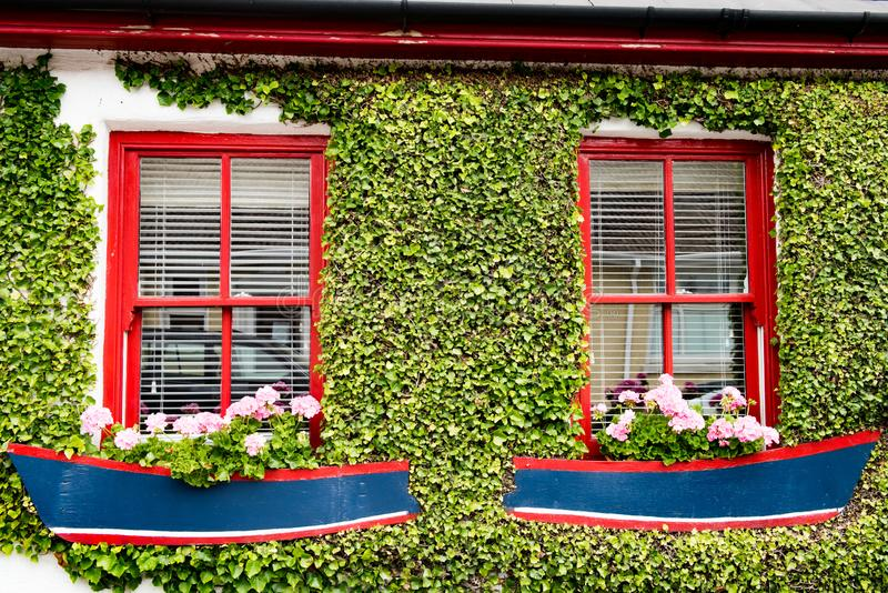 Housewall overgrown with creeping plants. Flower boxes in shape of boats, planted with geranium, red painted windows, Ireland stock images