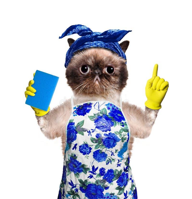 Housewife cat. stock photos