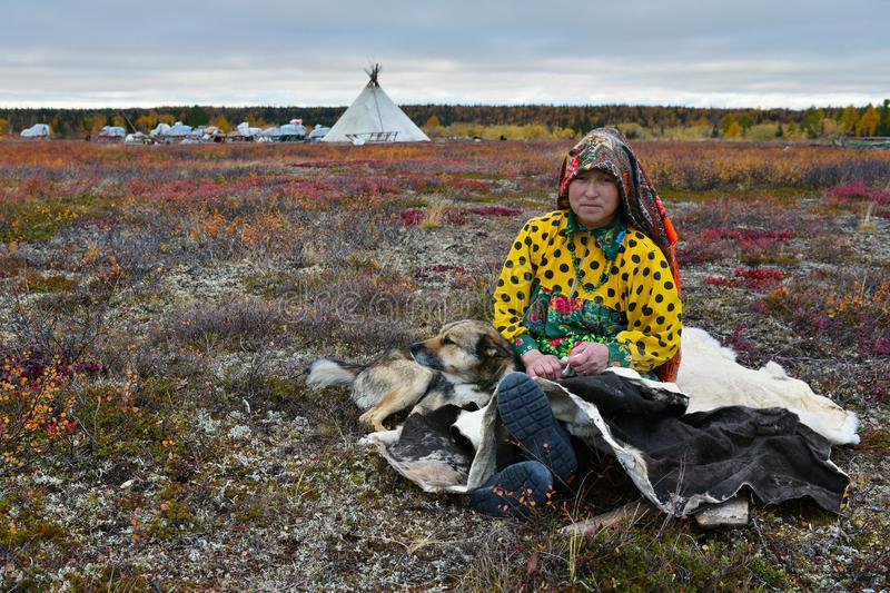 Housewife of nomad tribe takes a rest in front of camp with her reindeer laika. royalty free stock photography