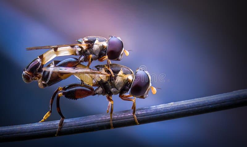 Housflies stock photos