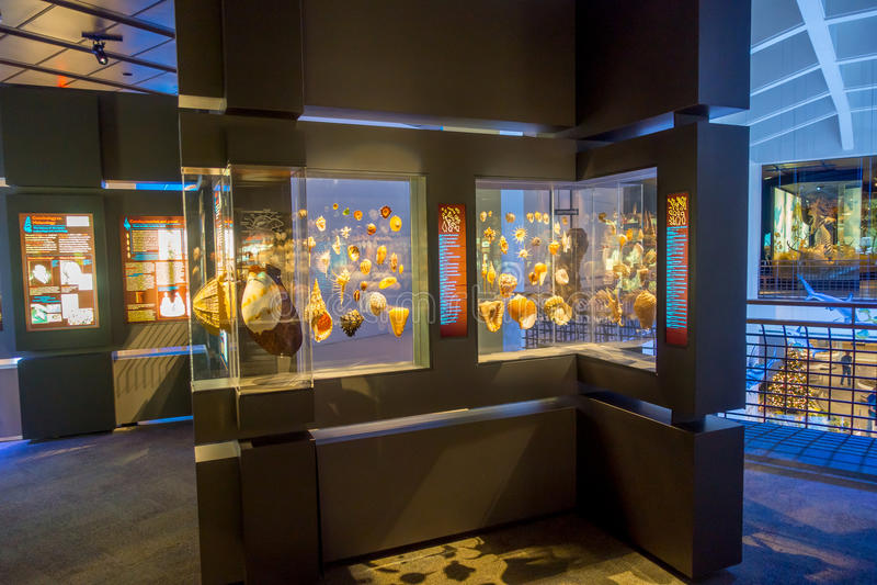 HOUSTON, EUA - 12 DE JANEIRO DE 2017: Exposição da concha do mar, dentro do Museu Nacional da ciência natural em Orlando fotografia de stock royalty free