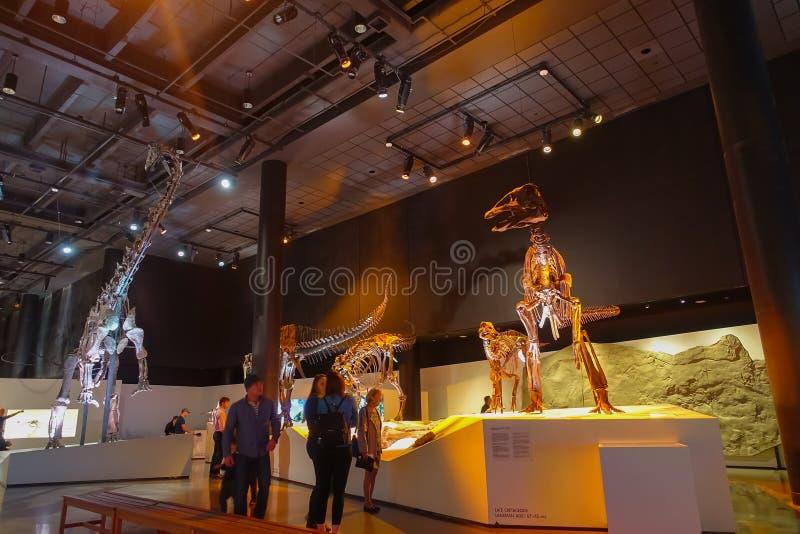 HOUSTON, EUA - 12 DE JANEIRO DE 2017: Povos não identificados que andam ao redor da exposição fóssil dos dinossauros no nacional fotos de stock royalty free