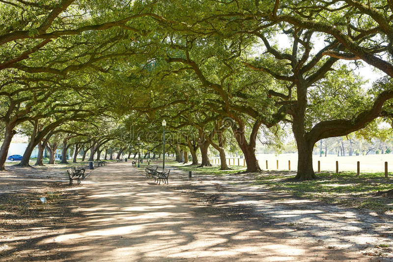 Houston Hermann park Marvin Taylor trail. With big oaks at texas royalty free stock image