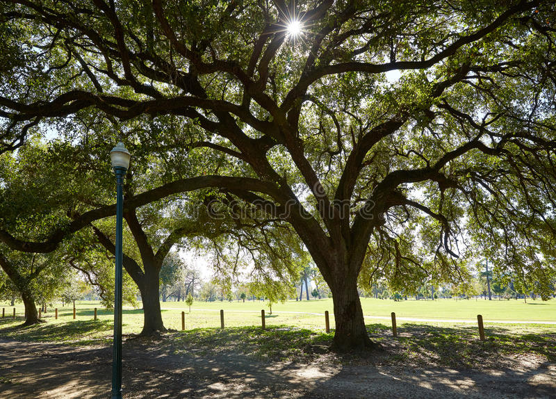Houston Hermann park Marvin Taylor trail. With big oaks at texas stock photo