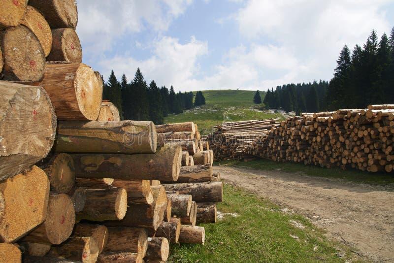 hout stock fotografie