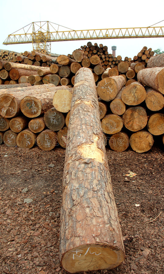 Hout stock foto's