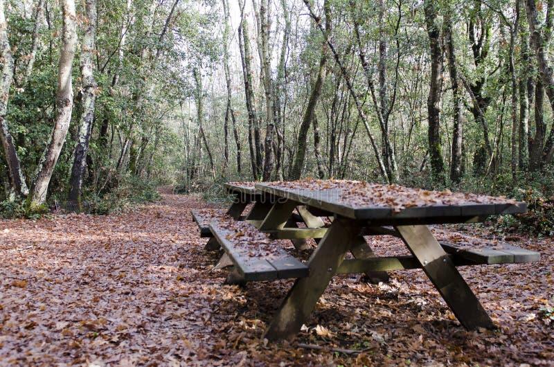 Hout in de herfst na de regen stock afbeelding