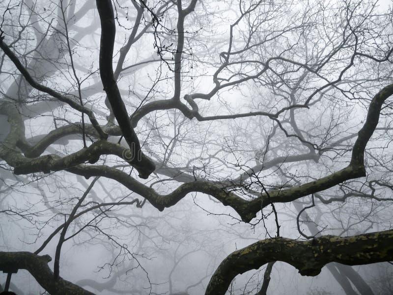 Hout in de mist stock foto's