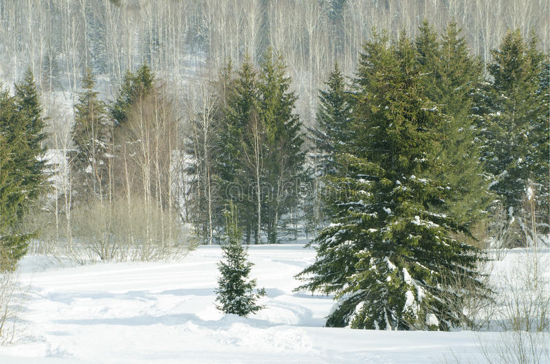 Hout in de winter in Rusland Siberië stock afbeelding