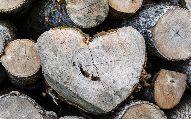 Hout Forest Shape nave Hart royalty-vrije stock afbeelding
