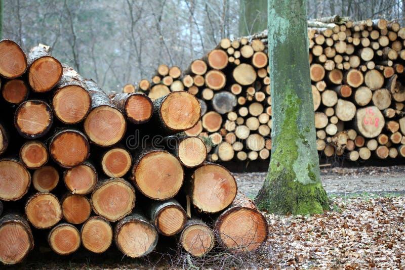 Hout in het bos stock afbeelding