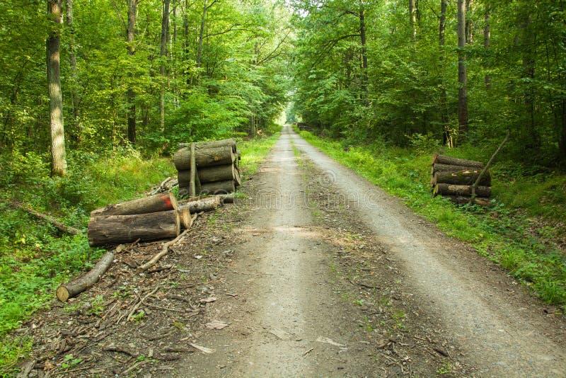 Hout in het bos dichtbij de weg royalty-vrije stock foto's