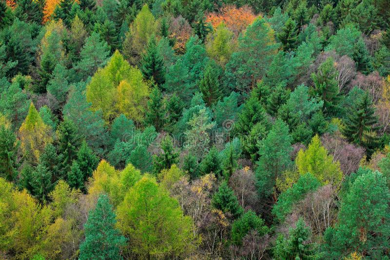 Hout met kleurenboom Regenachtige dag in bos met mist Gele Bomen De herfstbos, vele bomen in heuvels, oranje eiken, gele berk, stock afbeeldingen