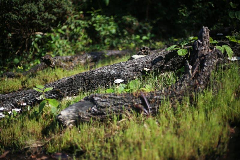 Hout met paddestoelen op het gras in het bos stock foto