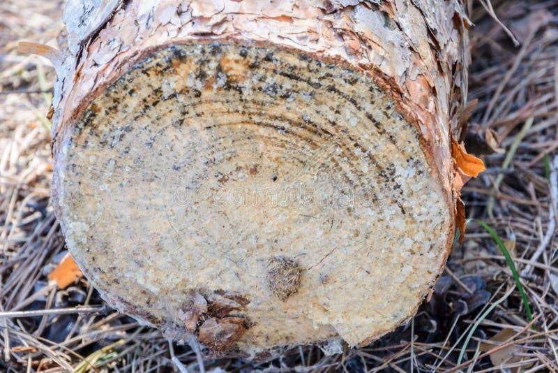 Hout na knipsel wordt verlaten dat Onwettige ontbossing De invloed van de mens op het milieu Milieu problemen royalty-vrije stock afbeeldingen