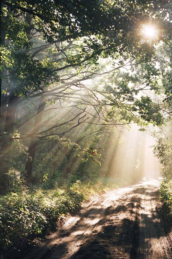 Hout na regen in zonstralen royalty-vrije stock afbeelding