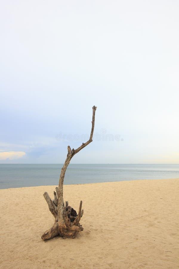 Hout op het strand in bewolkte dag bij dageraad stock fotografie