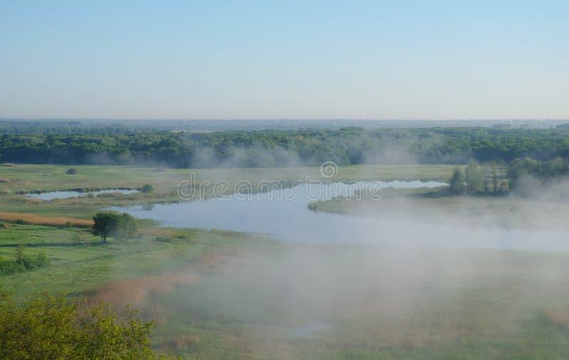 Hout op kust van de rivier, ochtend royalty-vrije stock foto's