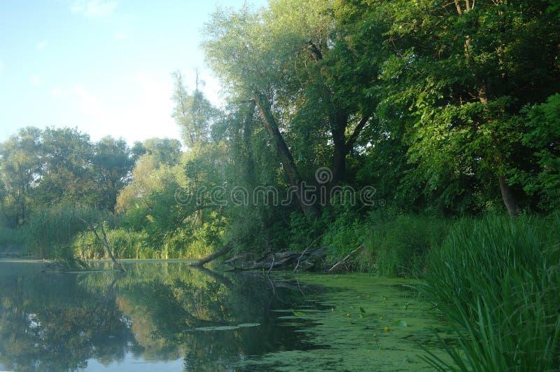 Hout op kust van de rivier, ochtend royalty-vrije stock foto