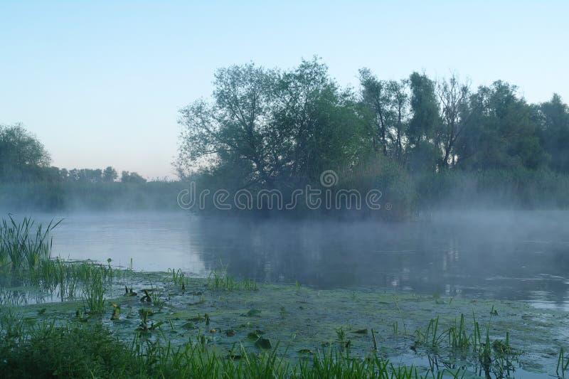 Hout op kust van de rivier, ochtend stock foto's