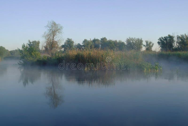 Hout op kust van de rivier, ochtend royalty-vrije stock afbeeldingen