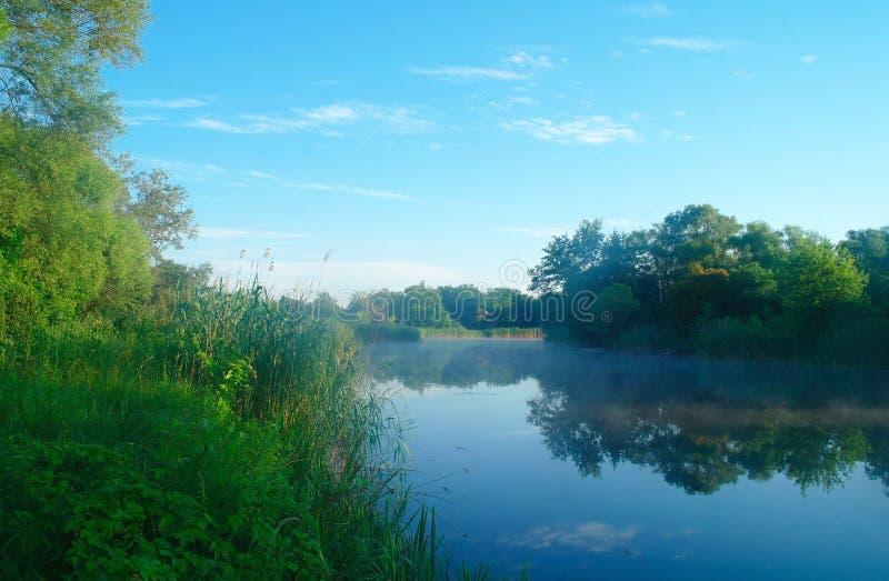Hout op kust van de rivier, ochtend stock afbeeldingen