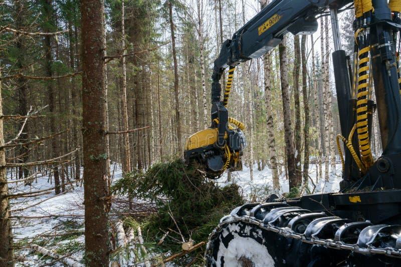 Houtbewerking in bos de besnoeiingensparren van de Logboeklader royalty-vrije stock afbeeldingen
