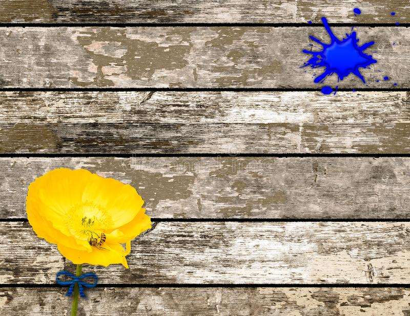 Houten achtergrond met Blauwe Verfvlek en Gele Papaver royalty-vrije stock foto