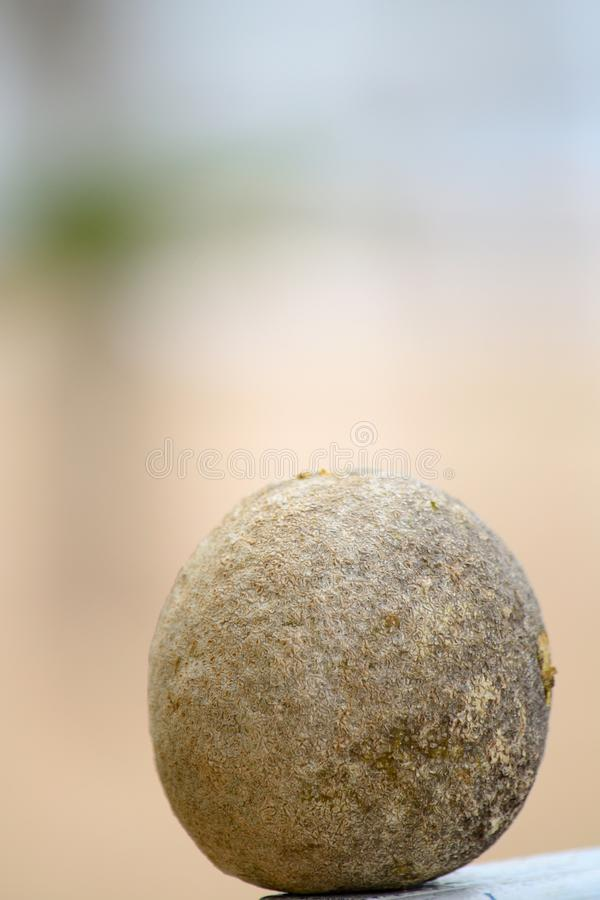 Houten appel stock fotografie
