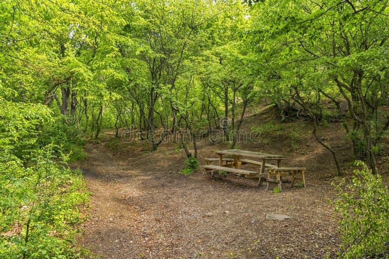 Houten banken in het bos voor rust royalty-vrije stock fotografie