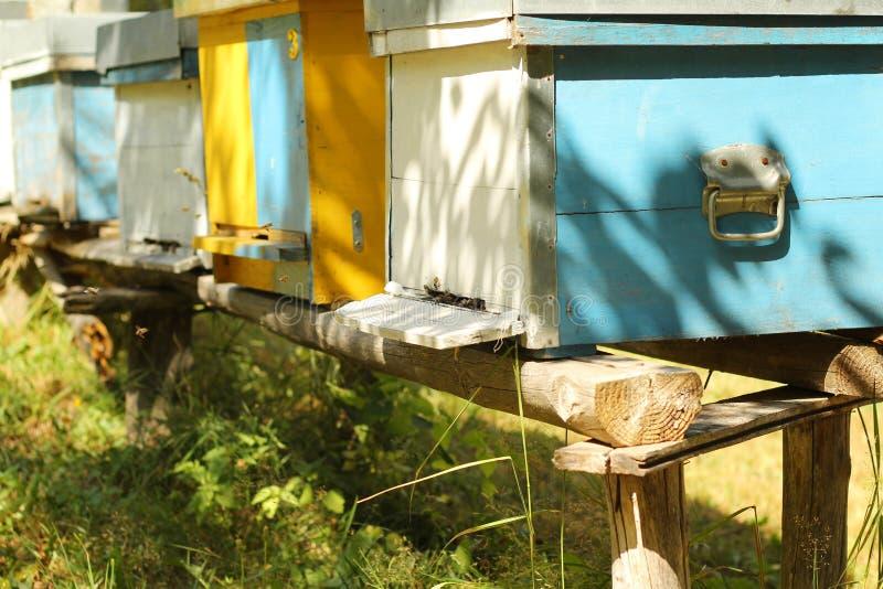 Houten bijenkorven, een bijenstal stock foto's