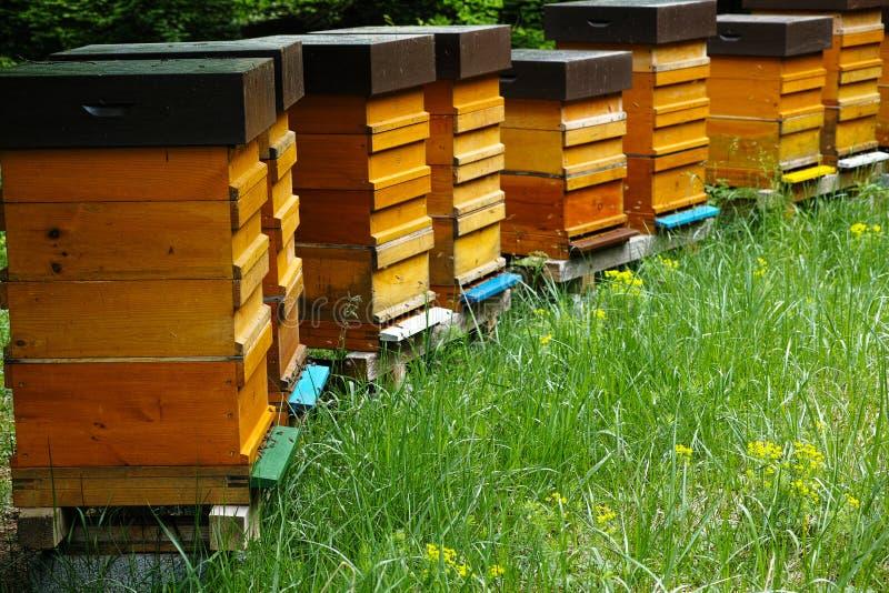 Houten bijenkorven met actieve honingbijen stock foto