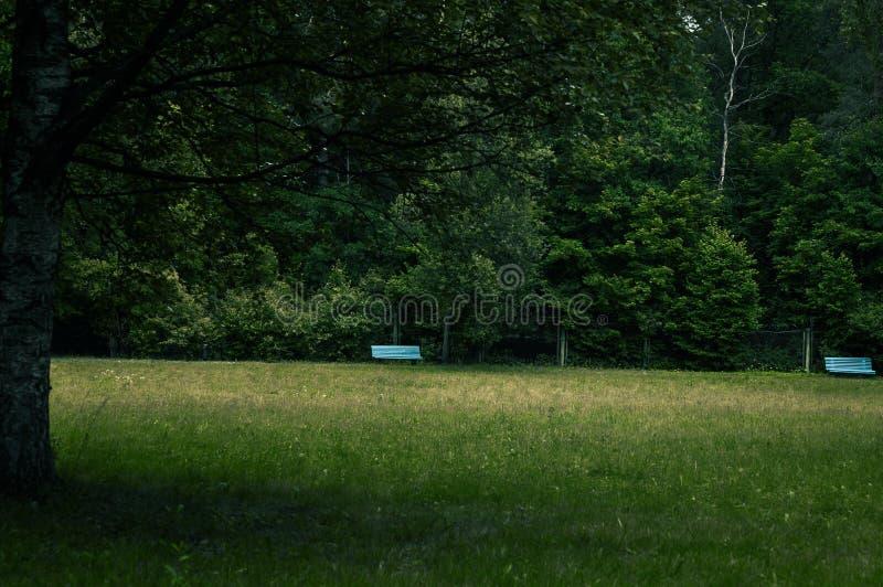 Houten blauwe banken in het Park op een bewolkte de zomerdag stock afbeelding