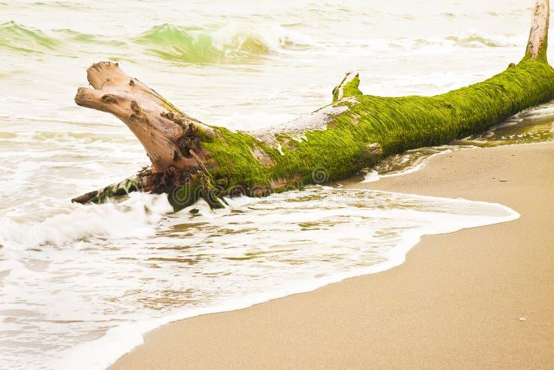 Houten boomstam binnen op de kust - conceptenbeeld royalty-vrije stock afbeelding
