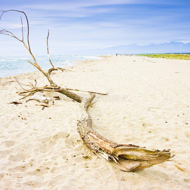 Houten boomstam binnen op de kust - conceptenbeeld stock foto's