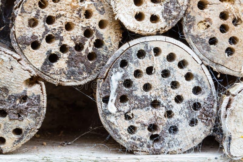 Houten boomstammen met insectenhotel en spiderweb royalty-vrije stock fotografie