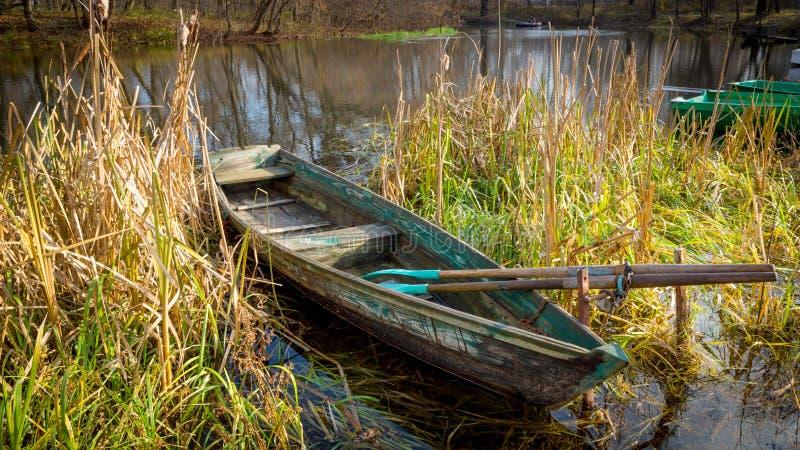 Houten boot in riet op rivier royalty-vrije stock fotografie