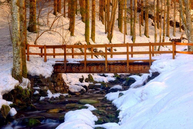 Houten brug in het bos stock afbeelding