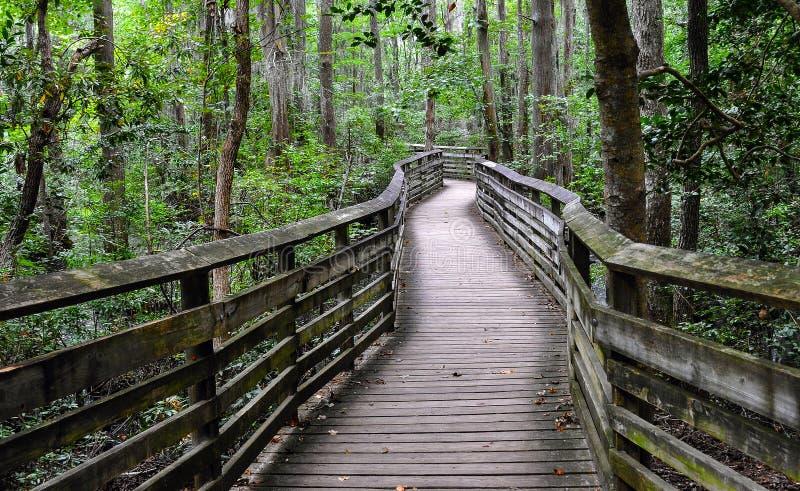 Houten brug in het bos, het Eerste Landende Park van de Staat, VA royalty-vrije stock foto