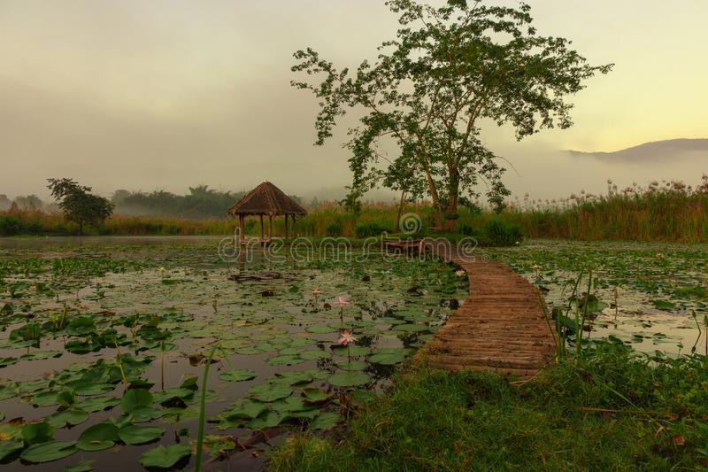 Houten brug over de lotusbloemvijver met zonsopgang en bergachtergrond royalty-vrije stock foto