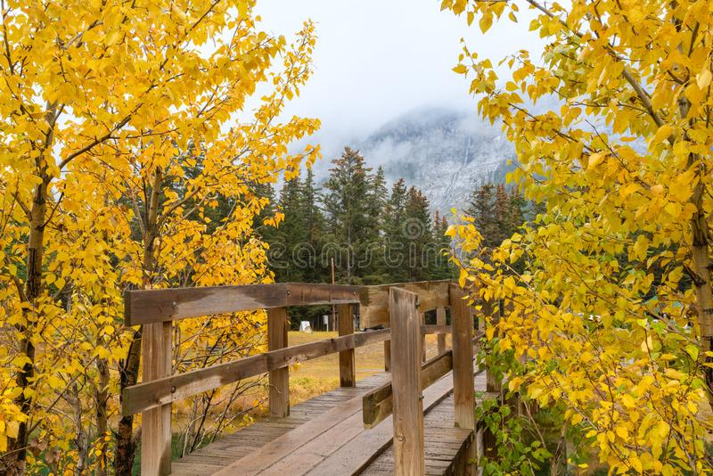 Houten brug tussen twee gele bomen van de de herfstpijnboom en nevelige lucht van berg op achtergrond bij Cascadevijver, het Nati royalty-vrije stock fotografie