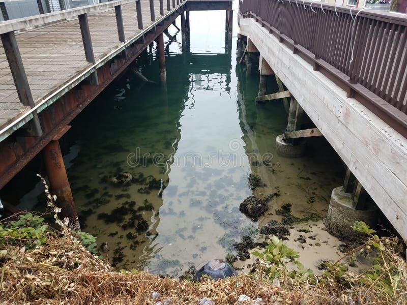 Houten bruggen of pijlers met water en algen stock afbeeldingen