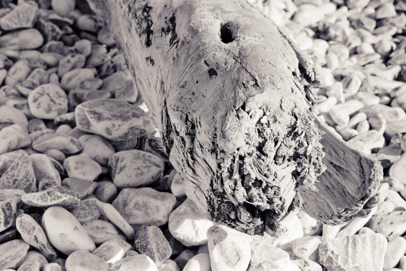 Houten die boomstam op een wit stenenstrand wordt verlaten - Italië stock afbeeldingen