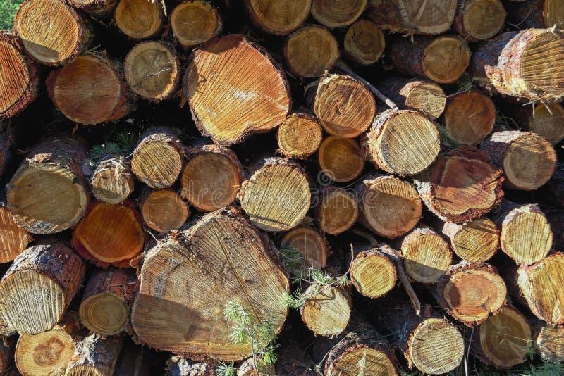 Houten die logboeken van pijnboomhout in het bos, in een stapel worden gestapeld stock fotografie