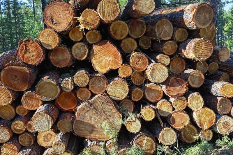 Houten die logboeken van pijnboomhout in het bos, in een stapel worden gestapeld royalty-vrije stock afbeelding