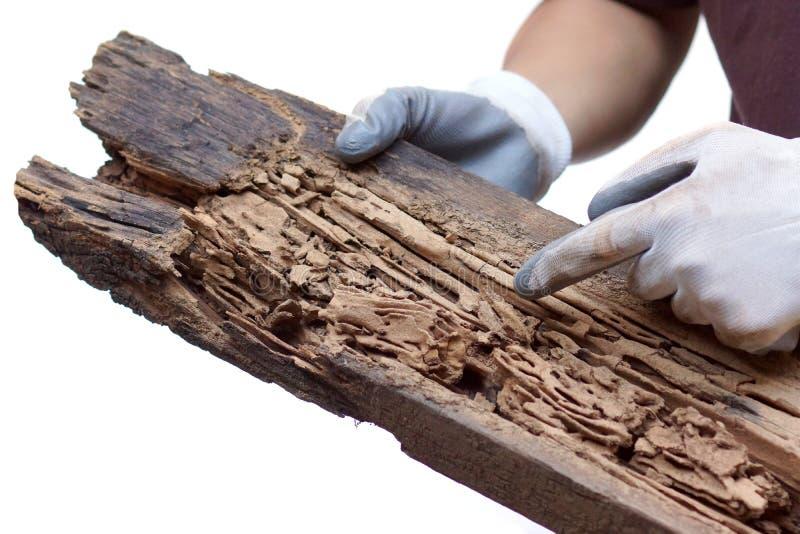 Houten die plank door termieten wordt vernietigd royalty-vrije stock afbeeldingen