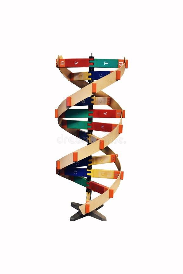 houten DNA-model royalty-vrije stock afbeelding